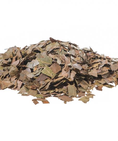 COMBRETO foglie